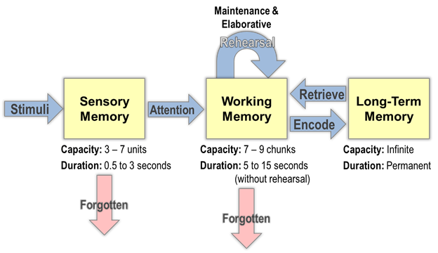 working memory affects cognitive processing Working memory- ability to temporarily store and perform a set of cognitive operations on information that requires divided attention and the management of limited capacity of short-term memory it is a conscious process that involves the manipulation of information.
